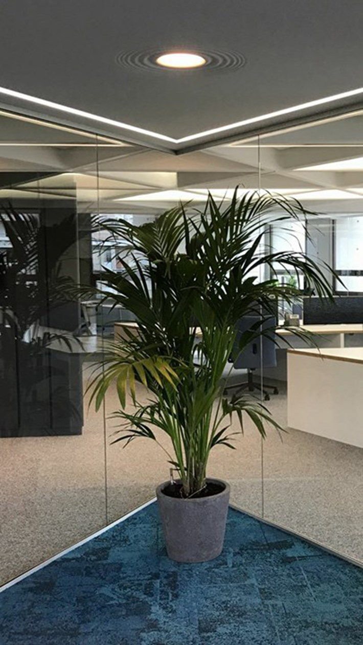 Nama Modular Fos 20 Plaster In Downlight Light installed above an indoor plant in a contemporary office